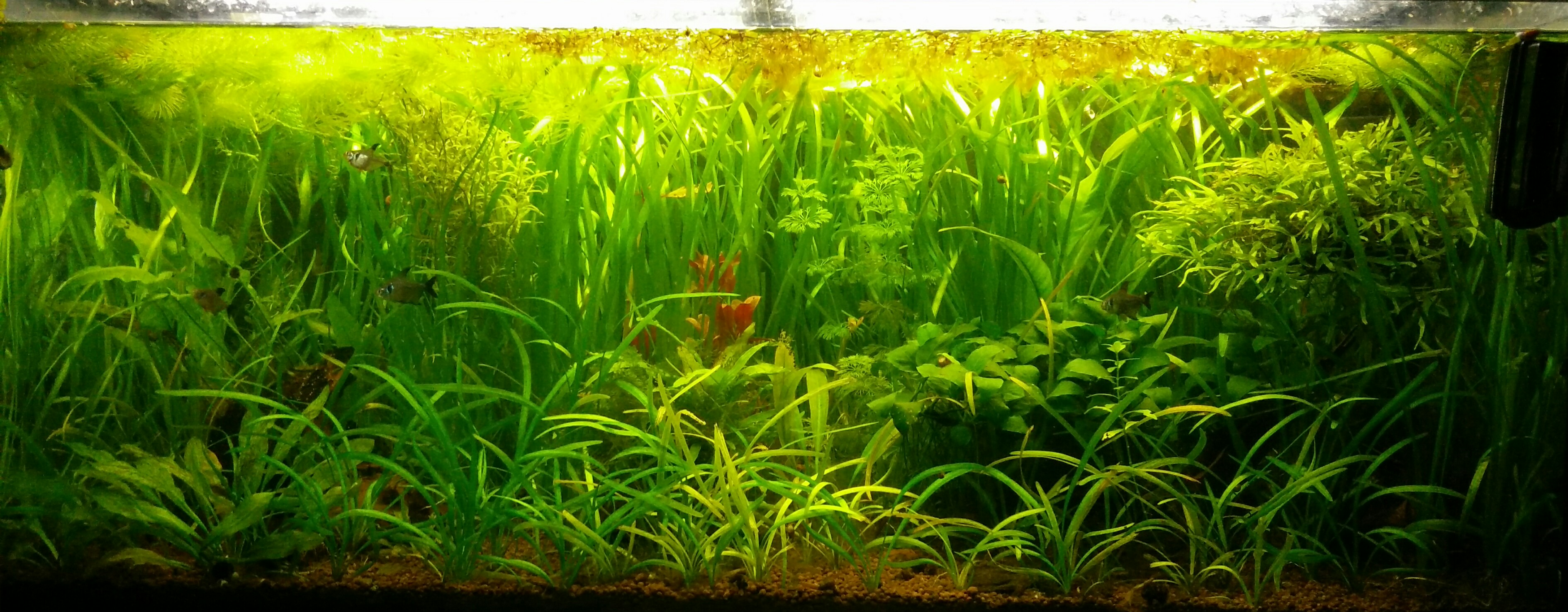 Photo de Aquarium Amazonien