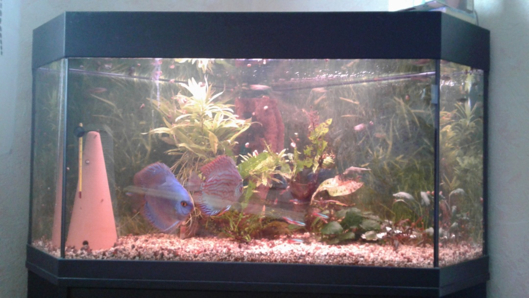 Photo de Aquarium Moyen d'angle