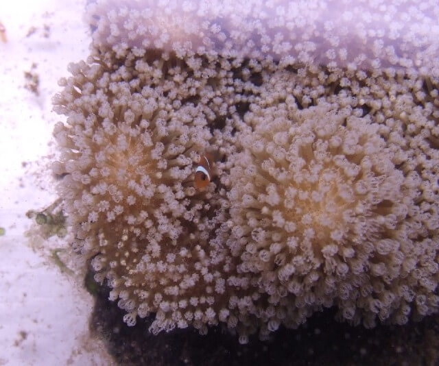 Picture of Coral